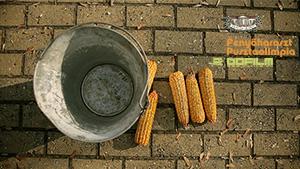 Fenyőharaszt pusztaolimpia <br /> &#8211; Event Film